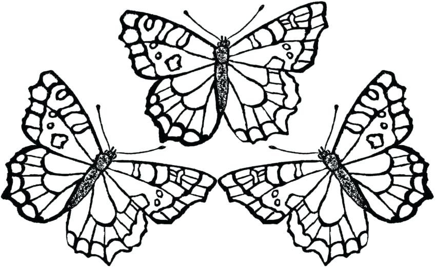 850x523 Caterpillar Butterfly Coloring Pages