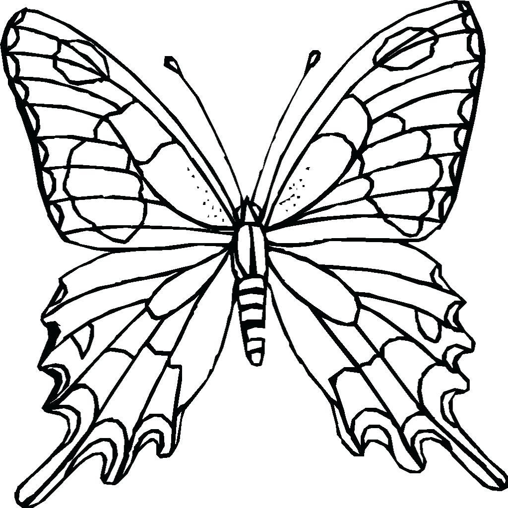 1024x1024 Caterpillar Color