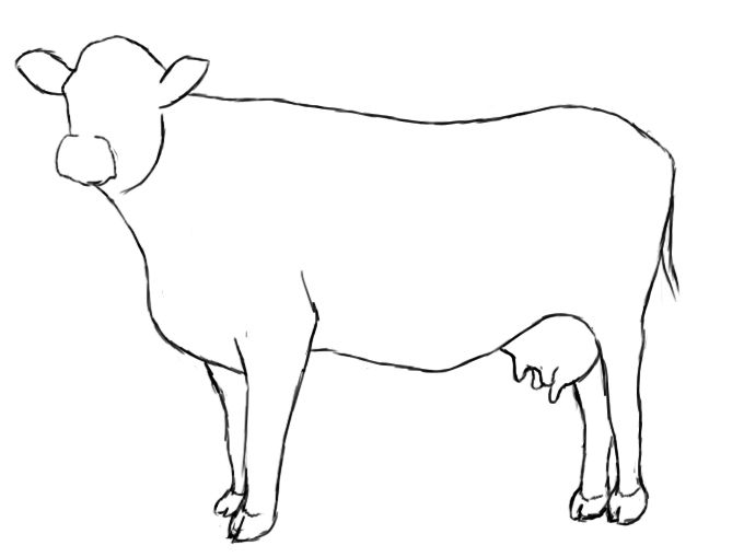 680x509 how to draw a cow drawing cow drawing, drawings, cow art