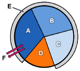325x288 Cell Cycle Diagram Labeled