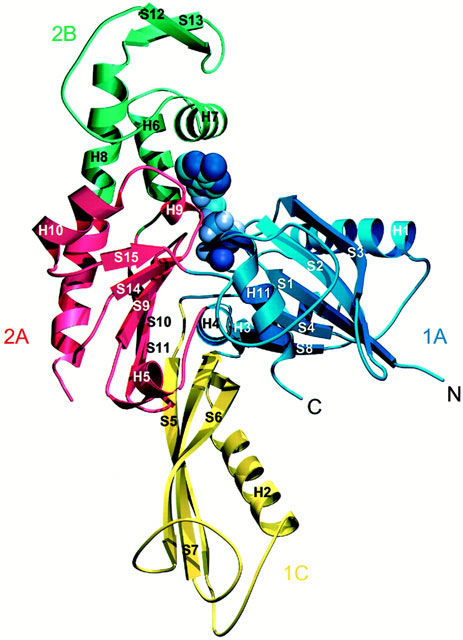 463x640 Crystal Structure Of The Cell Division Protein Ftsa