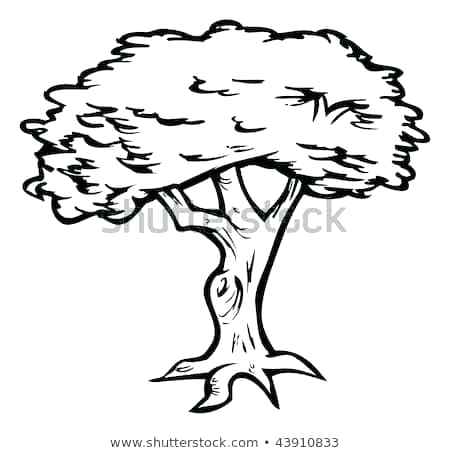 450x453 Outline Of Tree Tree Outline Vectors Palm Tree Outline Drawing