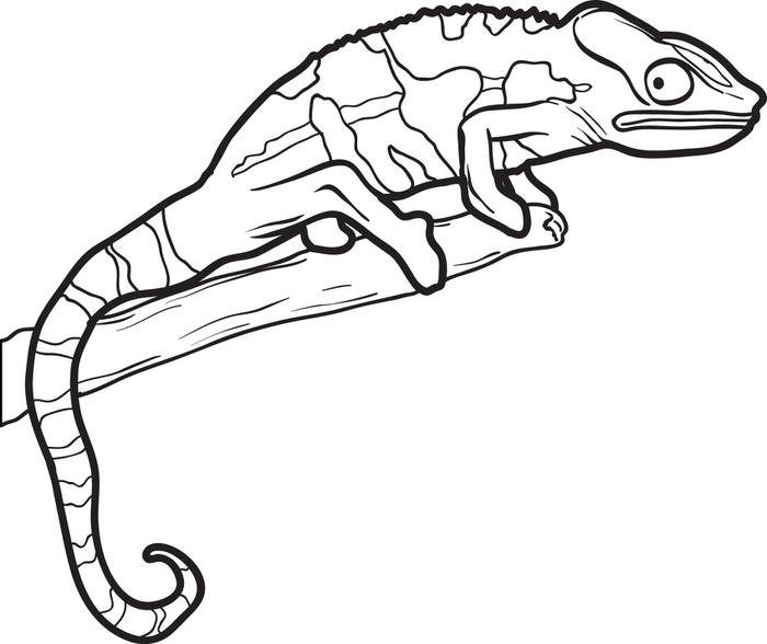 photo regarding Lizard Template Printable titled Chameleon Drawing Template Free of charge obtain easiest Chameleon