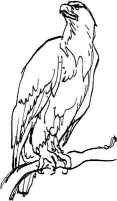 Charcoal Animal Drawings