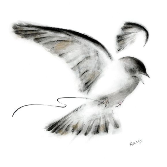 580x580 Ink And Charcoal Drawing Of A Lark With Worm Drawings