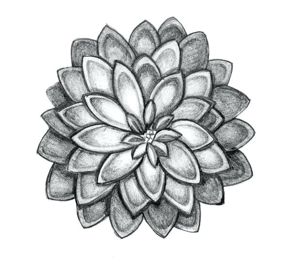 600x533 Drawing Of Flower