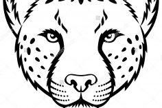 236x157 Easy Cheetah Drawing Colour Cartoon Steps A Head Photos Carmi