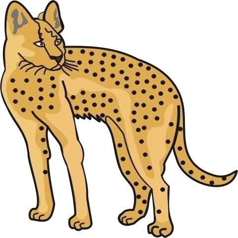480x480 cheetah coloring sheet cheetah coloring