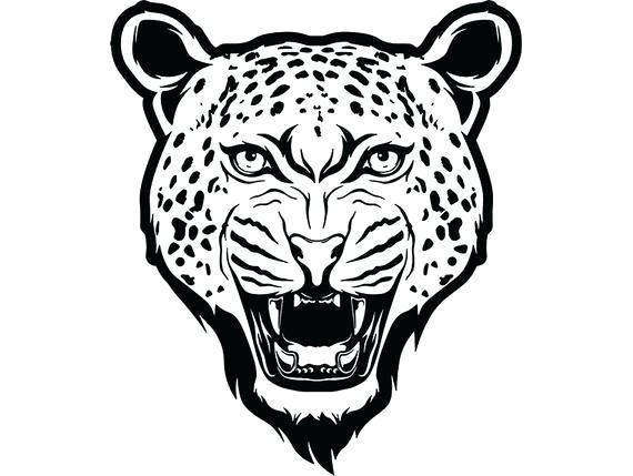 570x429 cheetah face drawing cheetah face line drawing zupa