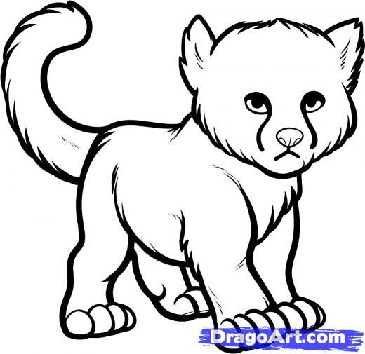 520x505 step how to draw a baby cheetah, baby cheetah