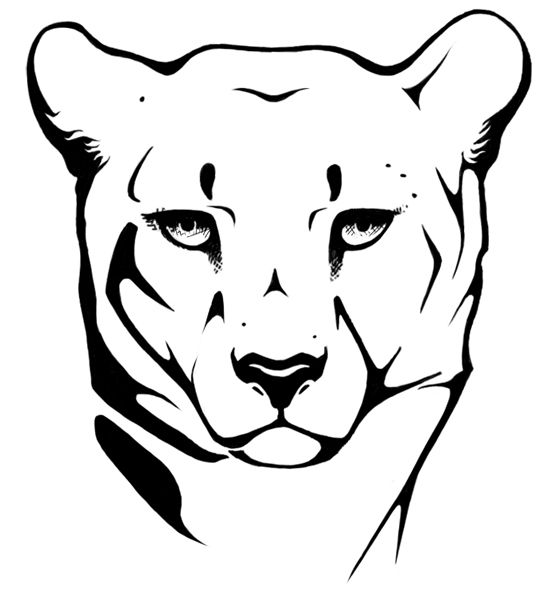 552x590 Cheetah Head Drawing Images Pictures