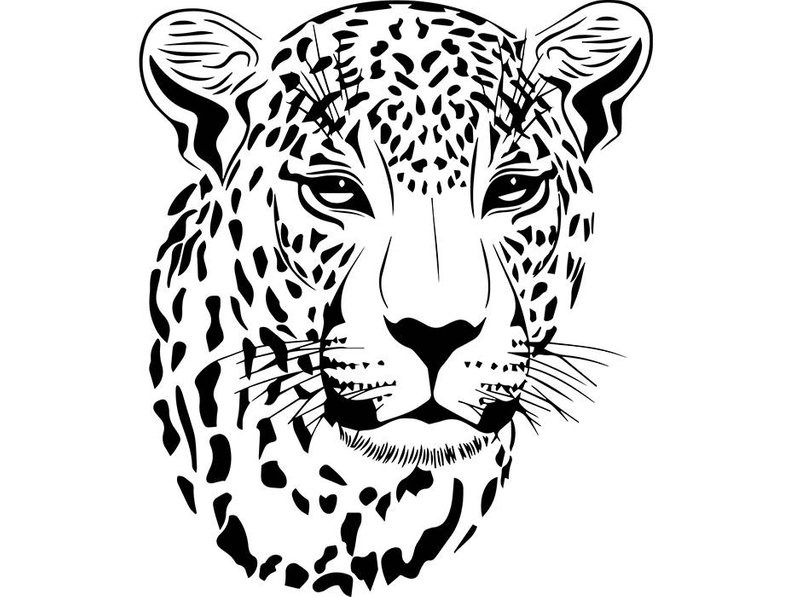 794x597 cheetah leopard jaguar wild cat spots wildlife wild animal etsy