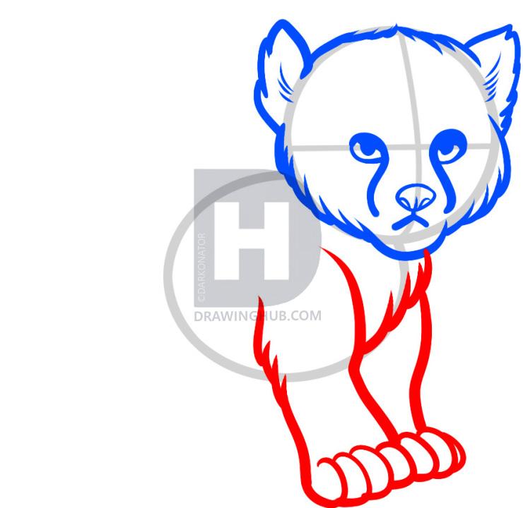 740x720 how to draw a baby cheetah, baby cheetah, step