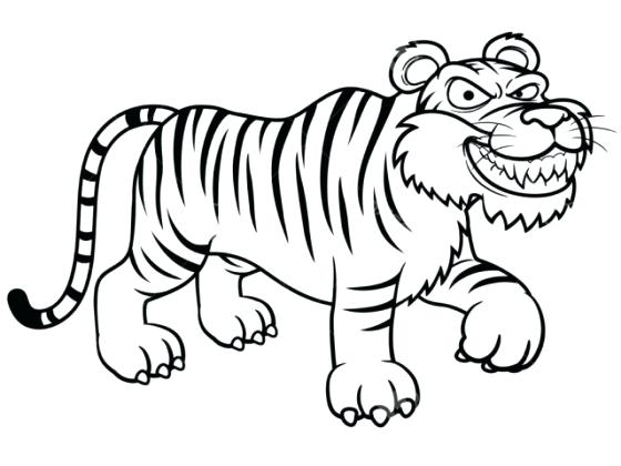 560x420 tiger outline drawing tiger template white tiger outline drawing