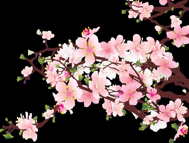 640x487 Cherry Blossom Drawings Clip Art
