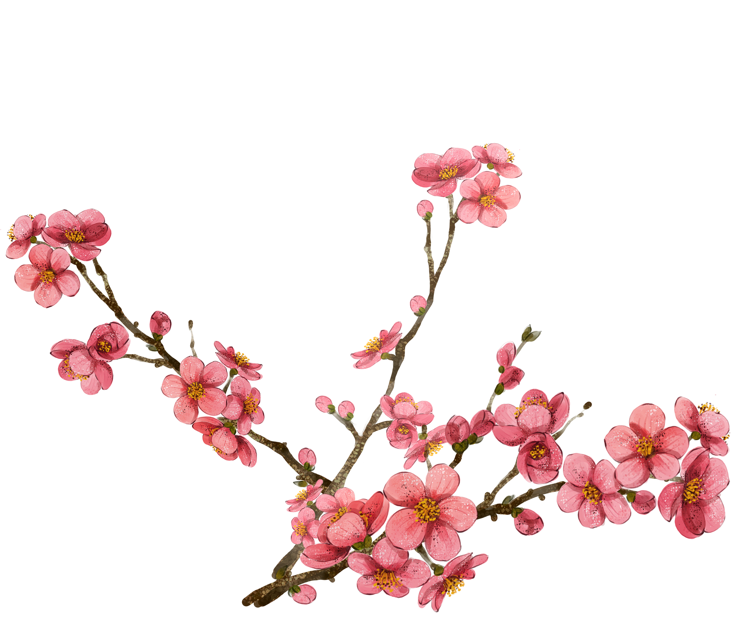 2563x2252 Collection Of Free Painting Drawing Cherry Blossom Download On Ui Ex