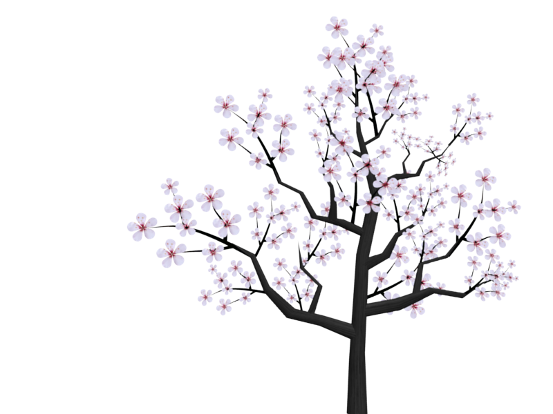 800x600 Collection Of Free Tree Drawing Cherry Blossom Download On Ui Ex
