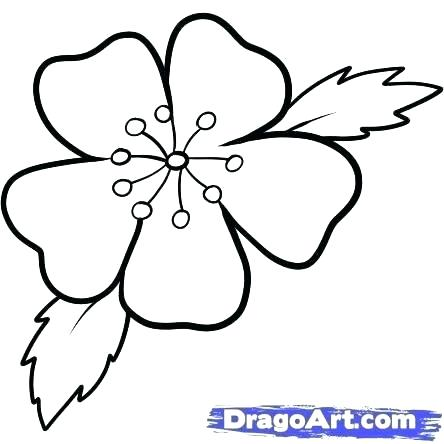 444x444 How To Draw Japanese Cherry Blossoms Branch Of With Flowers Apple