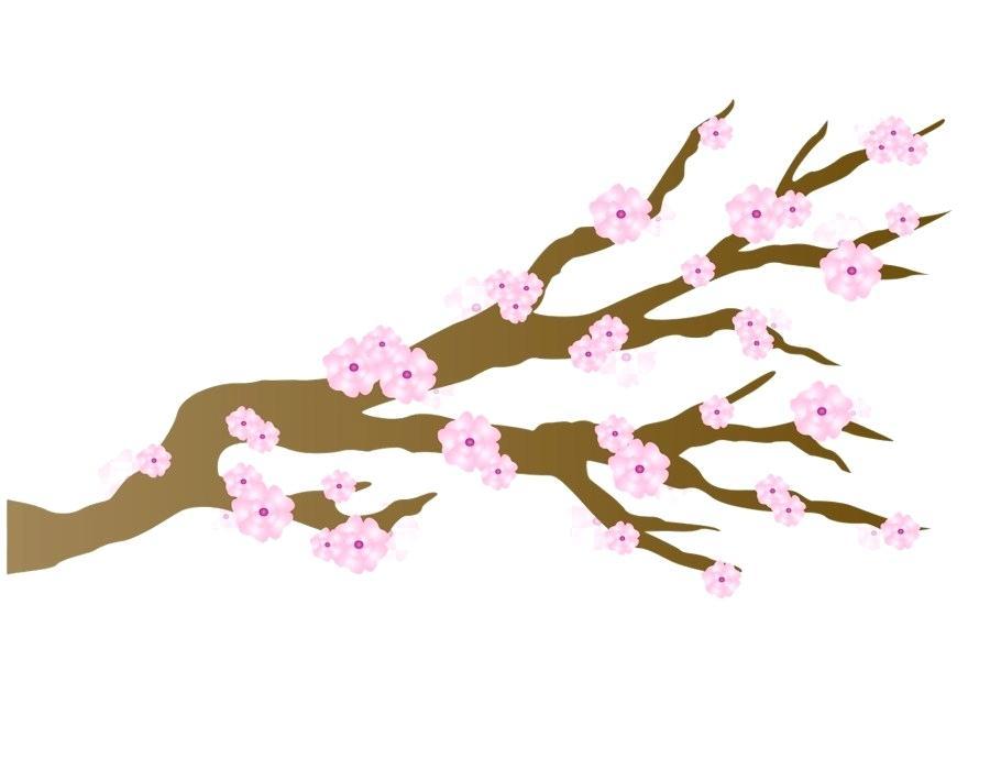 900x700 Japanese Cherry Blossom Drawings Nip