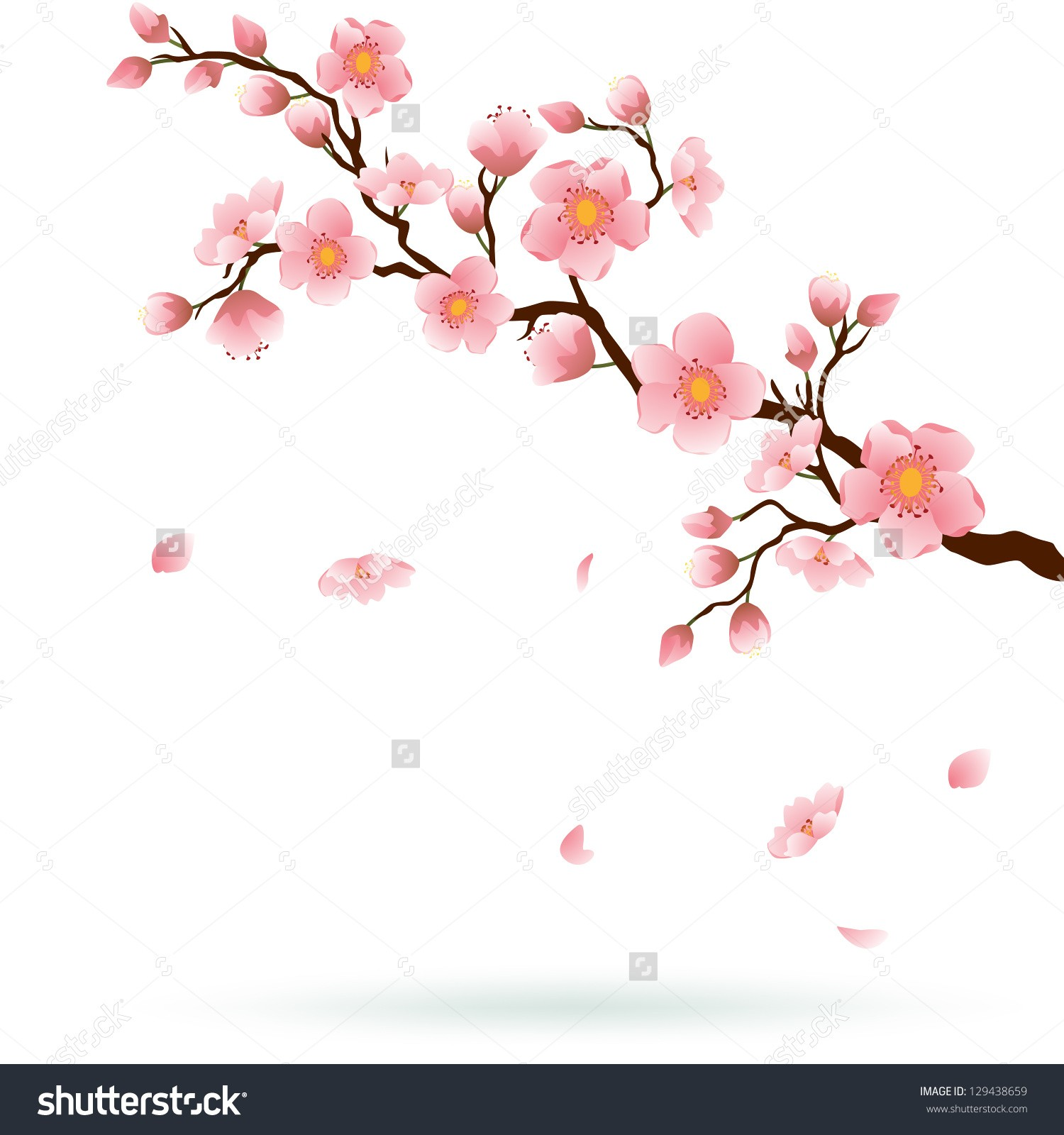 1500x1600 Cherry Blossom Tree Drawing Best Cherry Blossom Tree Drawing