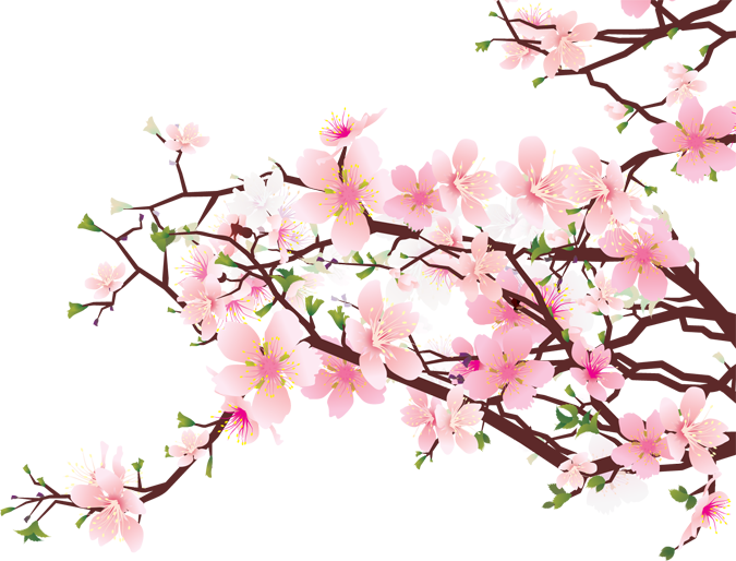 675x514 Collection Of Free Background Drawing Cherry Blossom Download