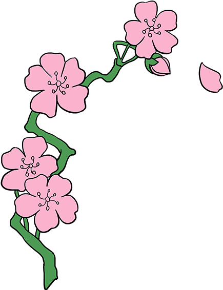 435x566 Hd Cherry Blossom Flower Drawing