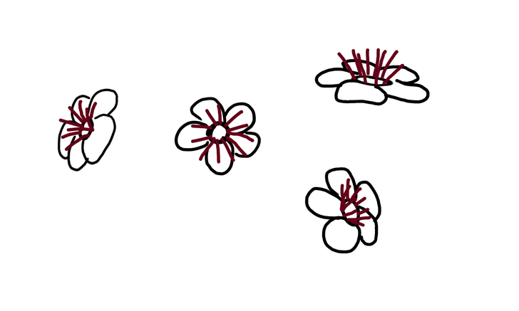 728x437 How To Draw A Cherry Blossom Steps