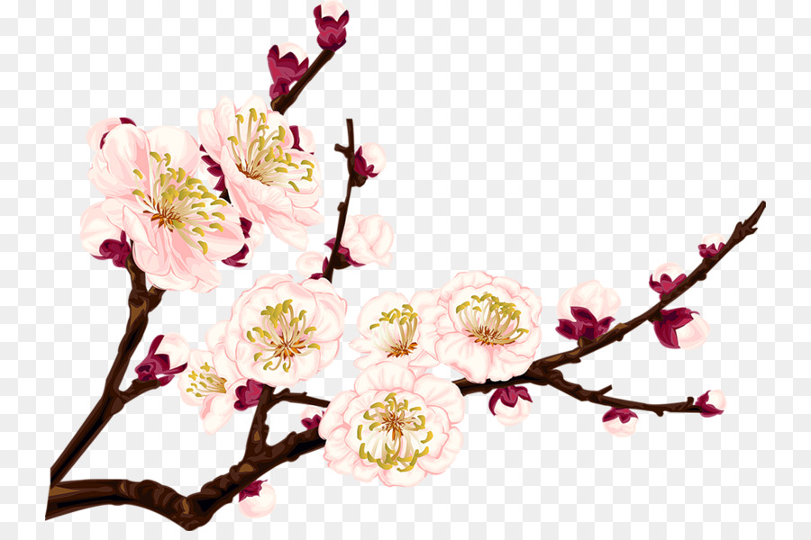 900x600 Cherry Blossom Drawings Clip Art