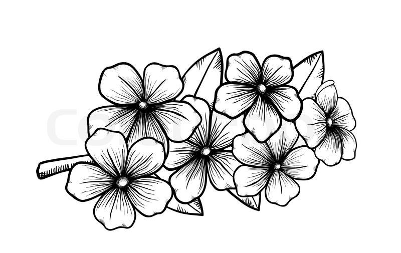 800x505 Branch Of A Blossoming Tree In Graphic Stock Vector Colourbox