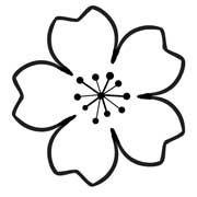 180x180 Cherry Blossom Template Templates