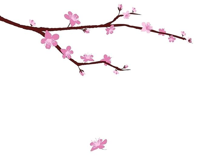673x518 drawing cherry blossoms cherry blossom cherry blossom drawing