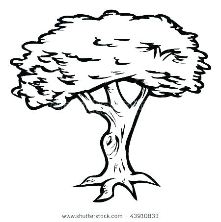 450x453 How To Draw Cherry Blossoms Blossom Tree Outline Banyan Drawing