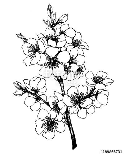 400x500 Vector, Graphic Of Sakura With Flowers Apple Tree Flowers Japan