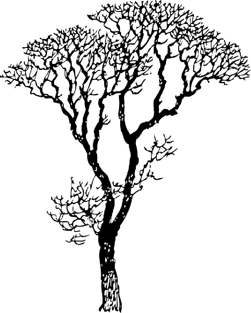 800x994 Dead Drawing Cherry Blossom Huge Freebie! Download