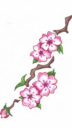 236x418 Best Cherry Blossom Tattoo Flower Outlines Images Cherry