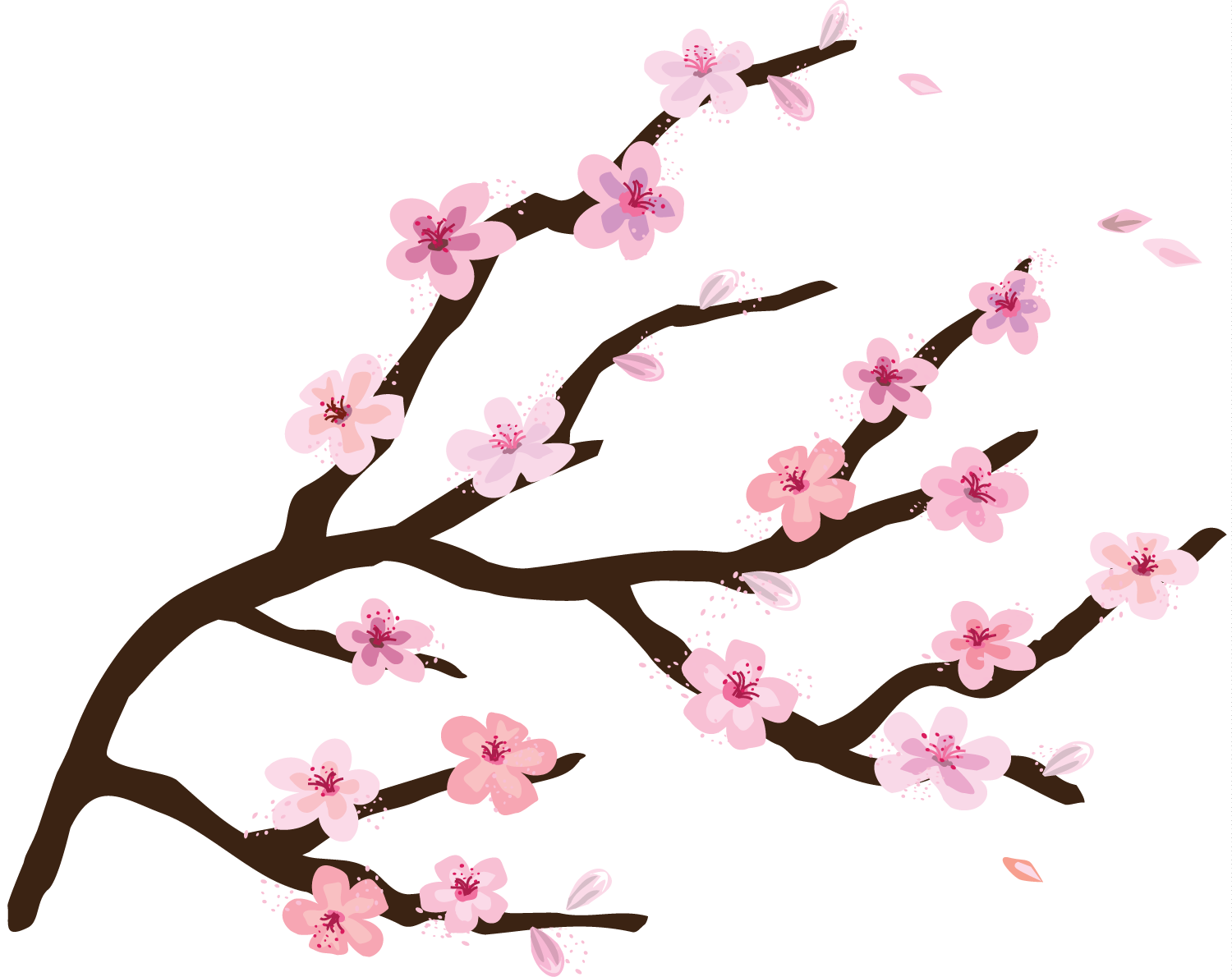 Cherry Blossom Drawing Tumblr