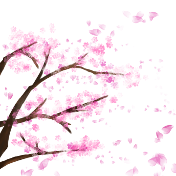360x360 Collection Of Free Transparent Wallpaper Cherry Blossom Download