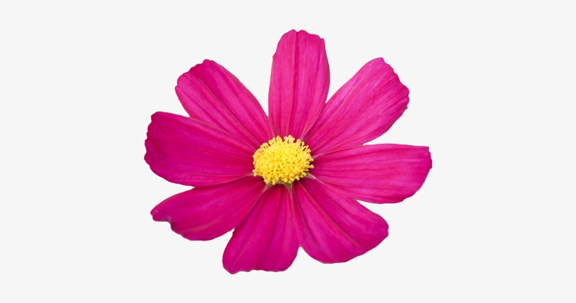 820x432 Flower Png Tumblr