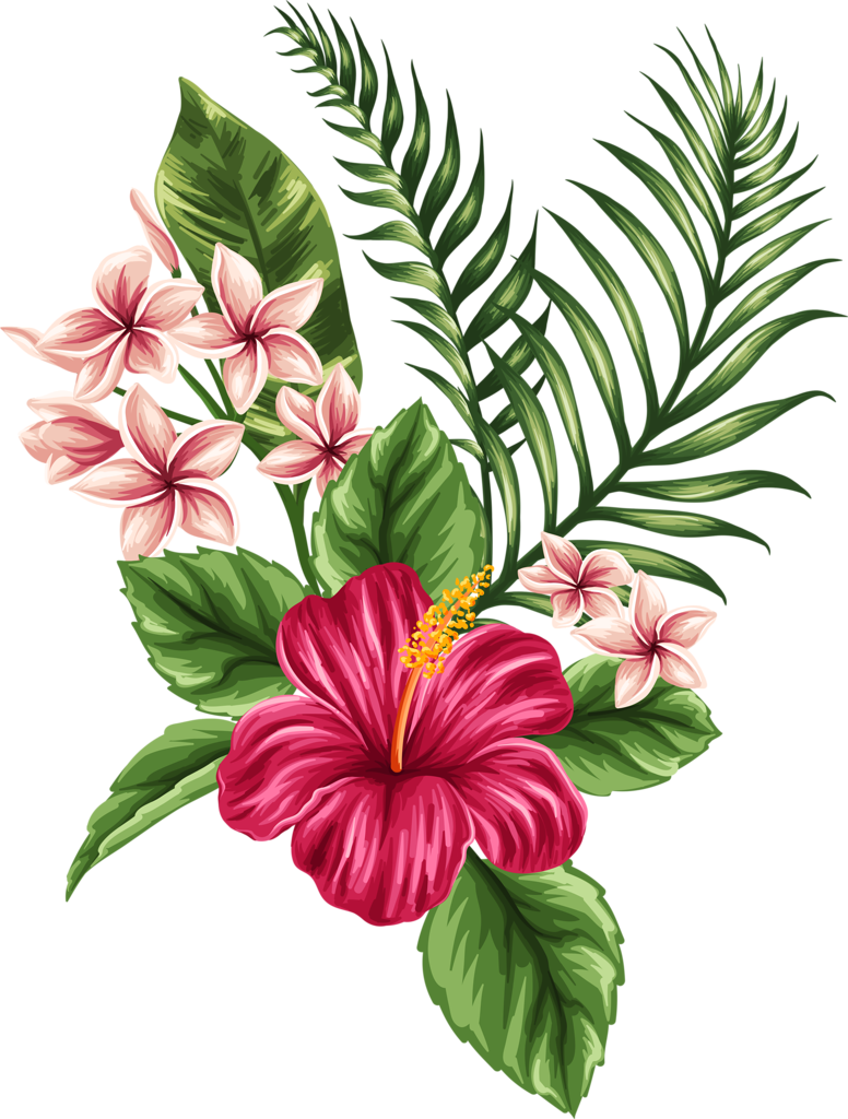776x1024 Flower Drawings With Color Pictures And Cliparts, Download Free