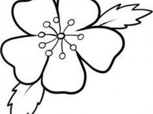 640x480 Blossom Clipart Transparent Tumblr Free Clip Art Stock