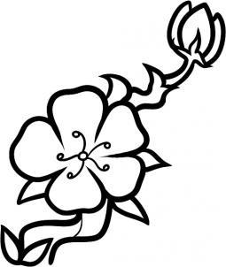 255x302 Cherry Blossom Drawing