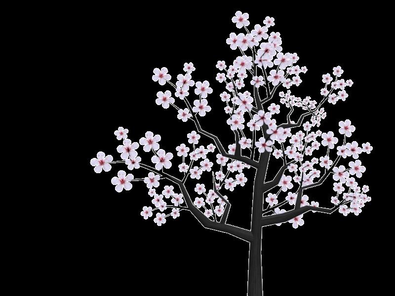800x600 Cherry Blossom Tree Drawing