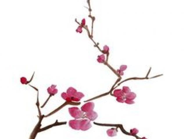 Cherry Blossom Drawing Wallpaper
