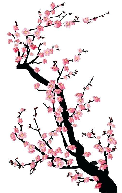504x800 Cherry Blossom Tree Branch Drawing Minnit