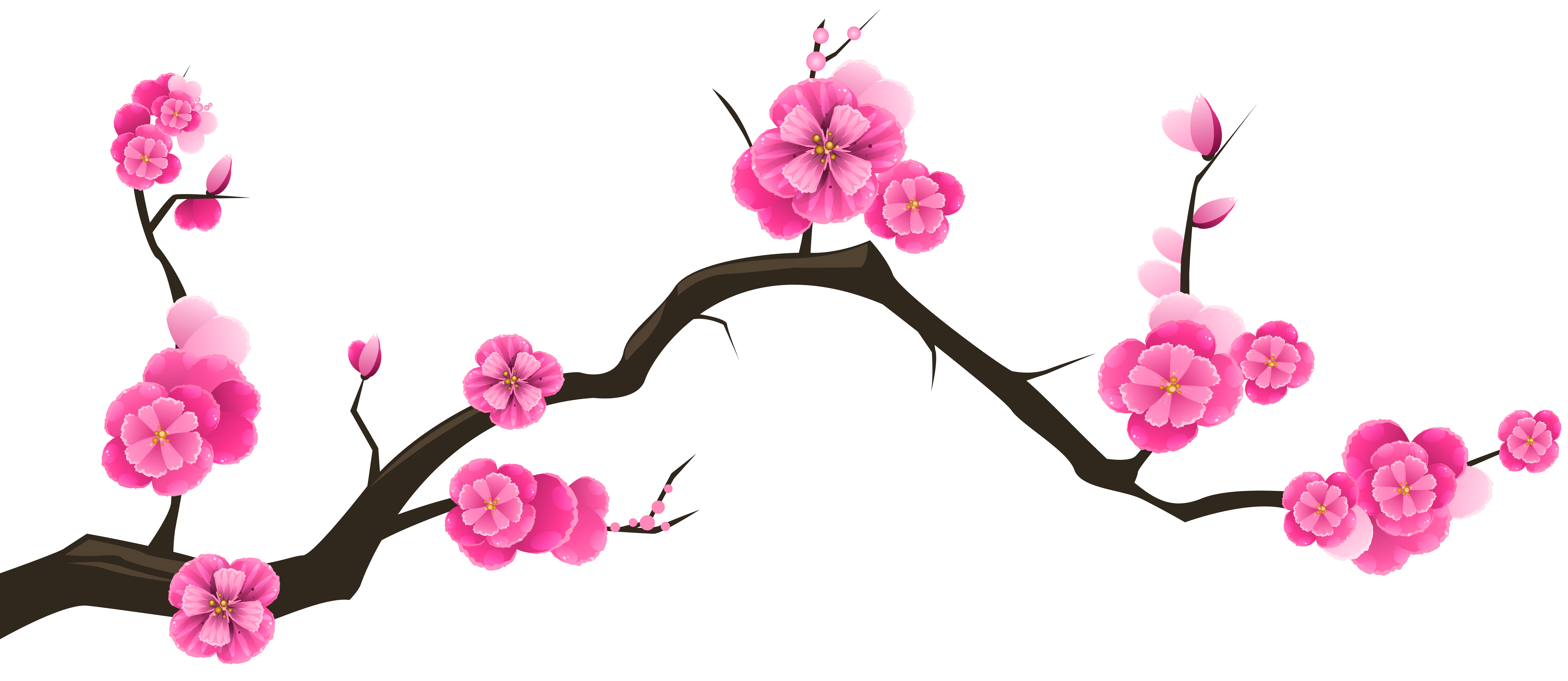 6230x2705 Collection Of Free Orchids Drawing Cherry Blossom Download On Ui Ex
