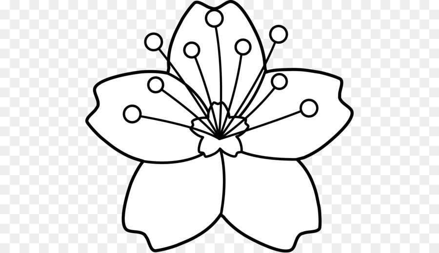 900x520 Drawing, Flower, White, Transparent Png Image Clipart Free Download