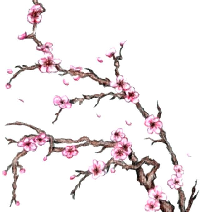 680x680 How To Draw Blossom How To Draw Cherry Blossoms In Addition