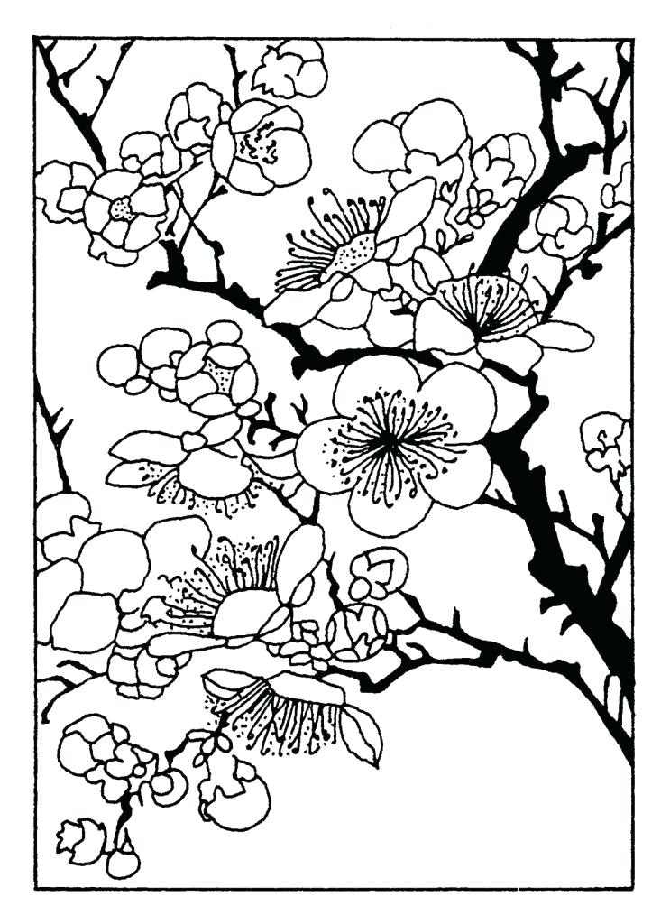743x1024 Cherry Blossom Coloring Pages