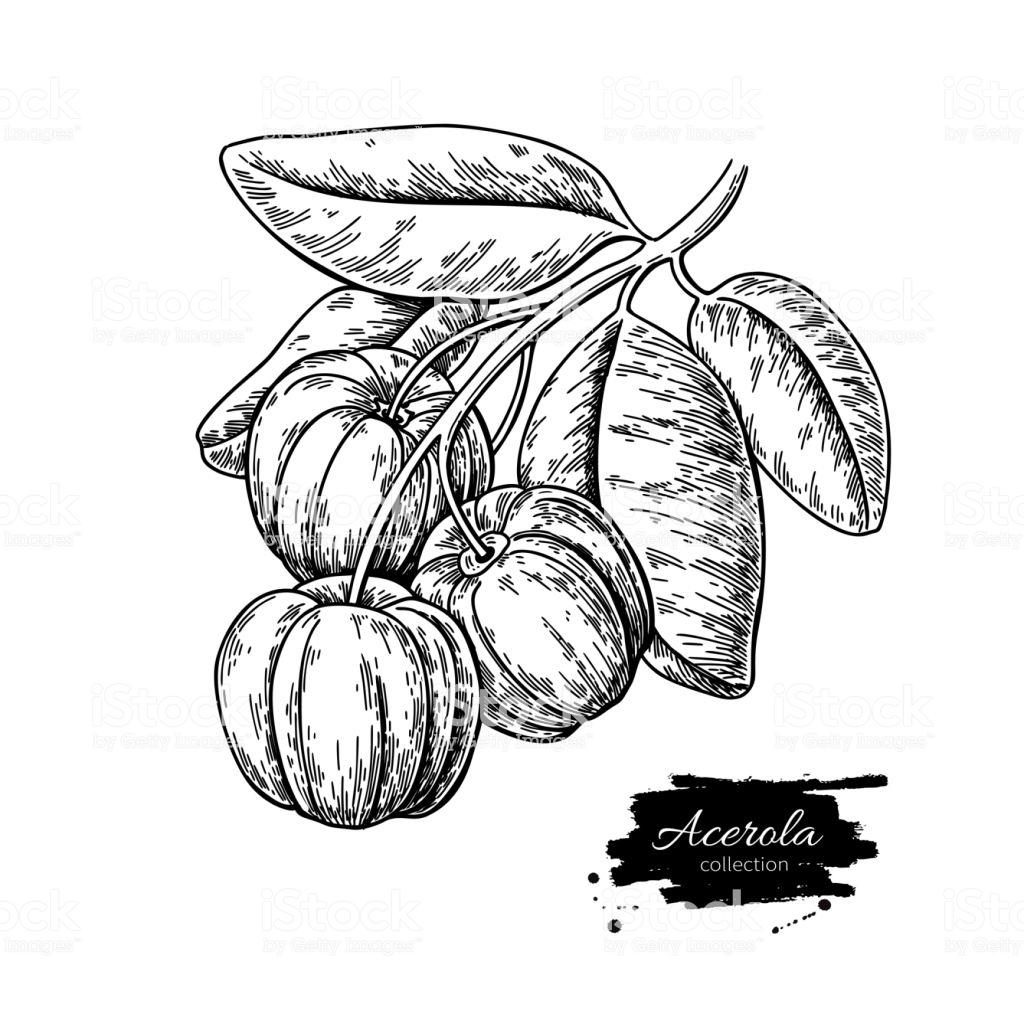 1024x1024 Cherry Blossom Drawing Cartoon A Flower Coffee Black