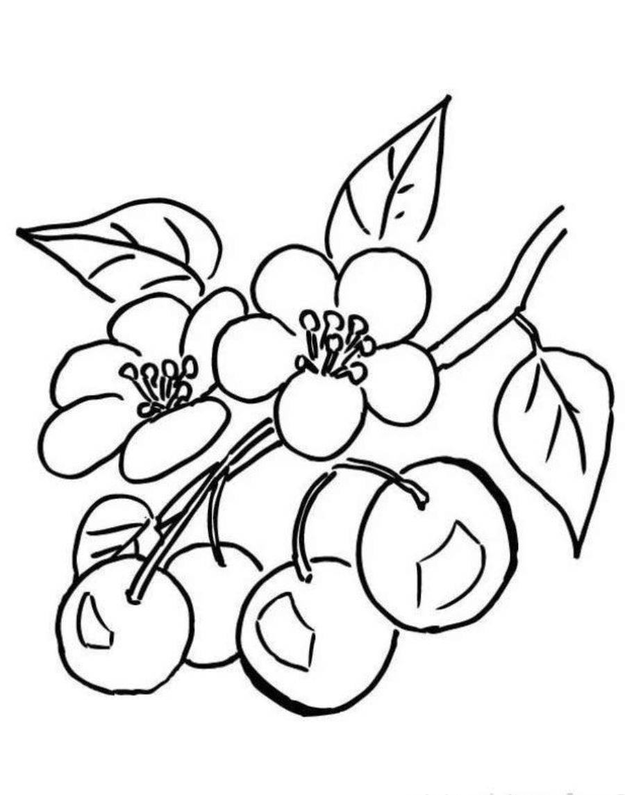 900x1145 Cherry Blossom Coloring Pages
